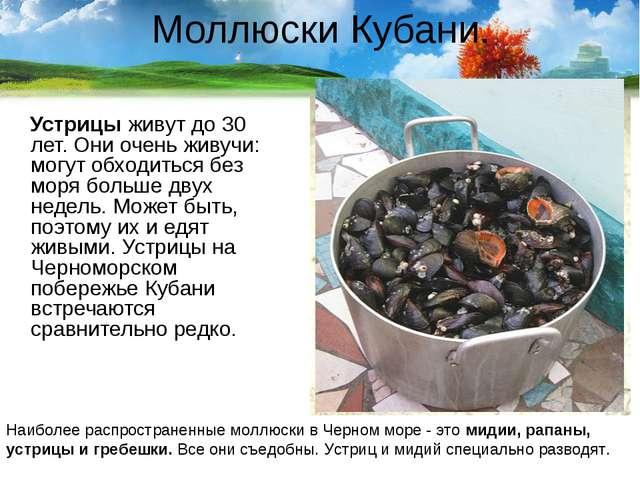 Моллюски Кубани. Устрицы живут до 30 лет. Они очень живучи: могут обходиться...
