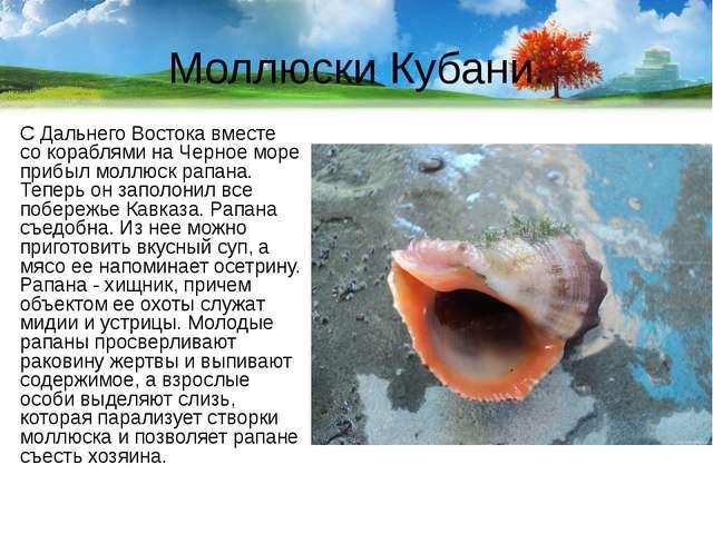 Моллюски Кубани. С Дальнего Востока вместе со кораблями на Черное море прибыл...