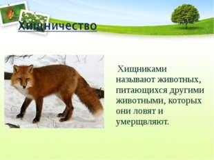 Хищниками называют животных, питающихся другими животными, которых они ловят