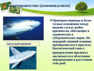 Примером перехода в более тесные отношения между видами служат рыбы-прилипалы