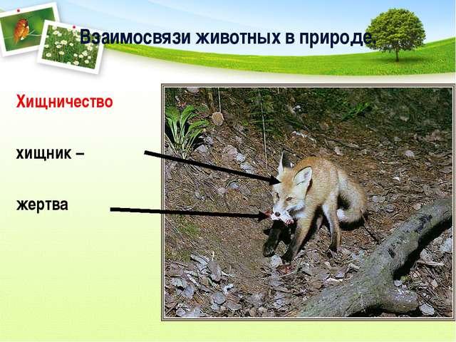 Взаимосвязи животных в природе. Хищничество хищник – жертва