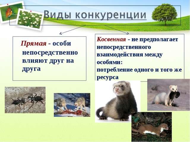 Прямая - особи непосредственно влияют друг на друга Косвенная - не предполаг...