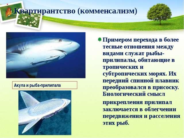 Примером перехода в более тесные отношения между видами служат рыбы-прилипалы...