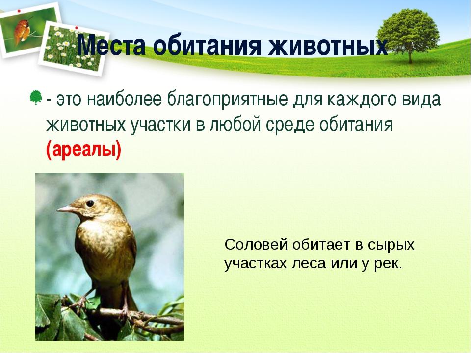 Места обитания животных - это наиболее благоприятные для каждого вида животны...