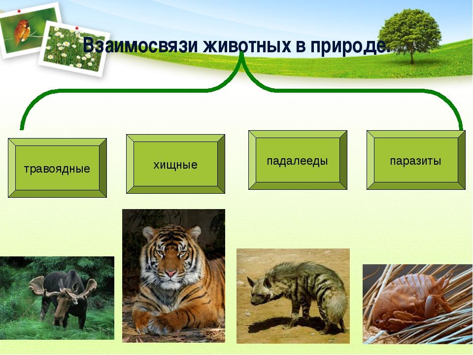Взаимосвязи животных в природе. травоядные хищные падалееды паразиты
