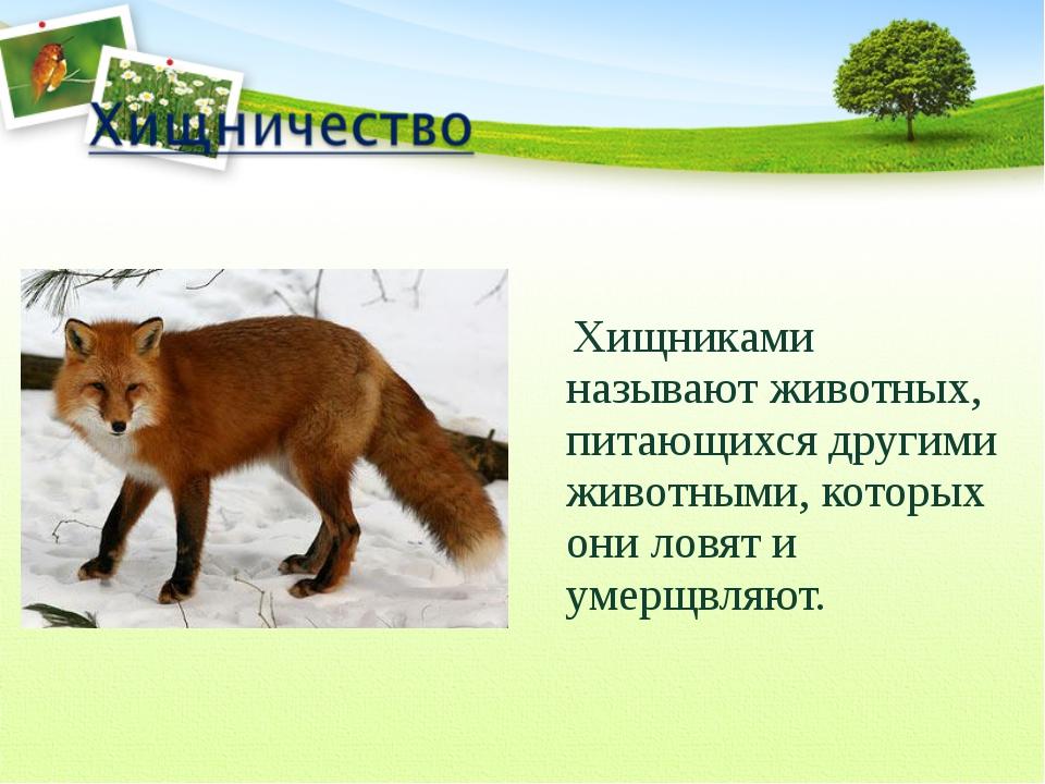 Хищниками называют животных, питающихся другими животными, которых они ловят...