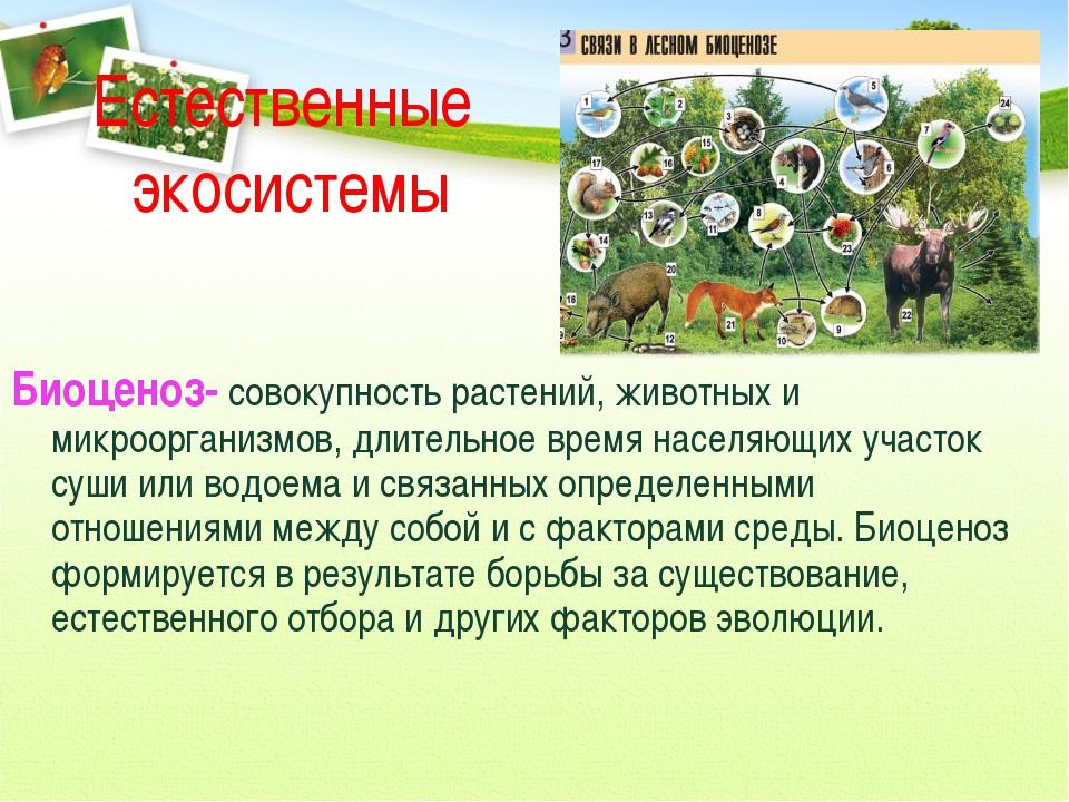 Естественные экосистемы Биоценоз- совокупность растений, животных и микроорга...