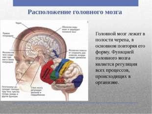Расположение головного мозга Головной мозг лежит в полости черепа, в основном