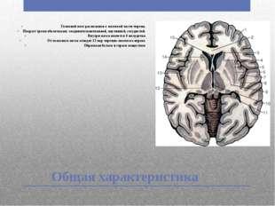 Общая характеристика Головной мозг расположен в мозговой части черепа. Покрыт