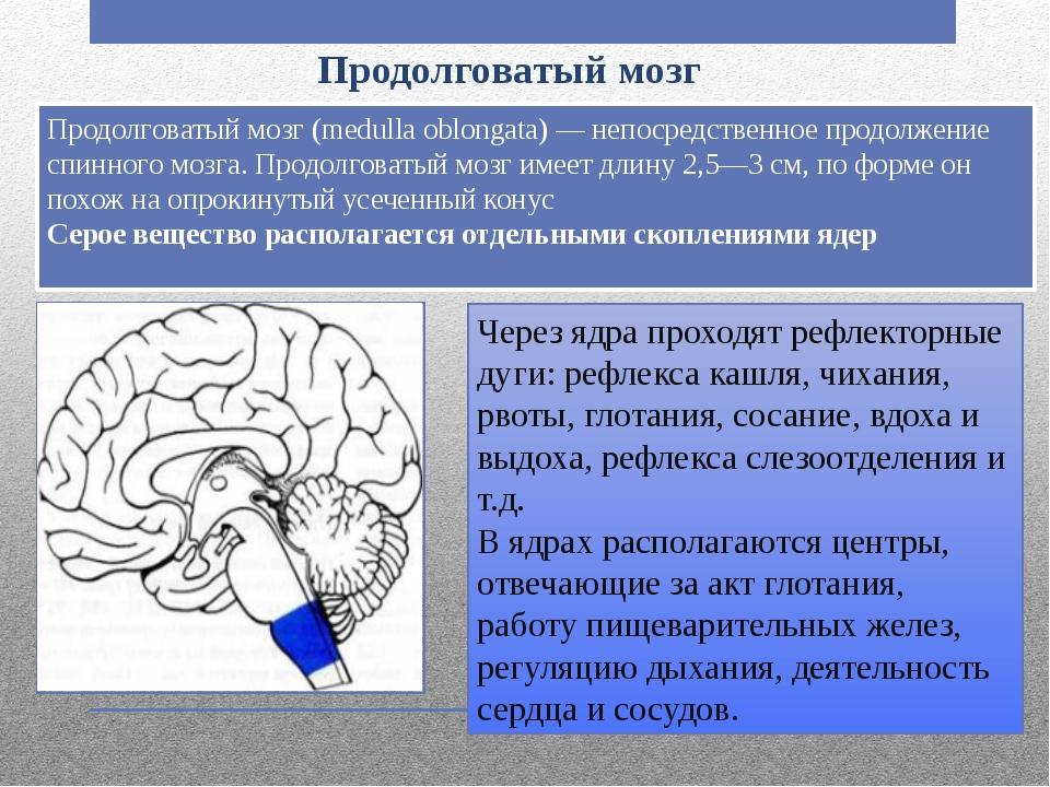 Продолговатый мозг Продолговатый мозг (medulla oblongata) — непосредственное...