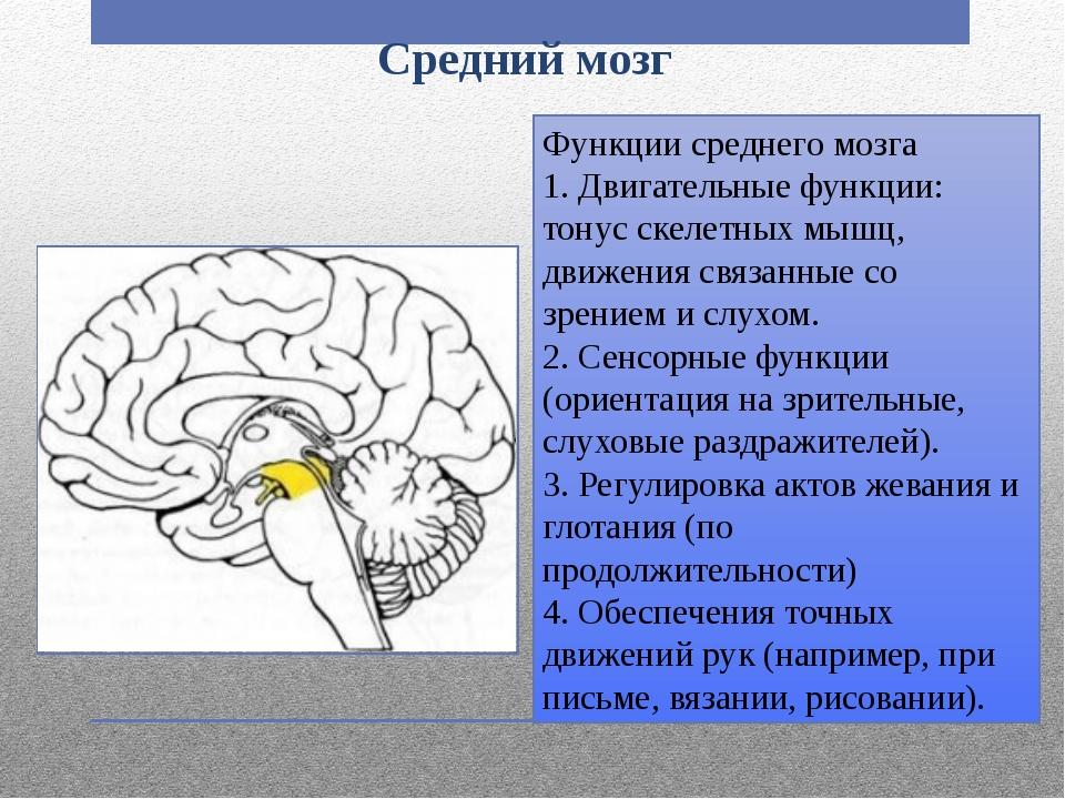 Средний мозг Функции среднего мозга 1. Двигательные функции: тонус скелетных...