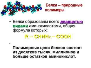 Белки – природные полимеры Белки образованы всего двадцатью видами аминокисл