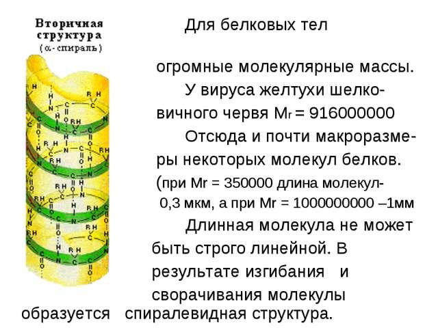 Для белковых тел характерны огромные молекулярные массы. У вируса желтухи ше...