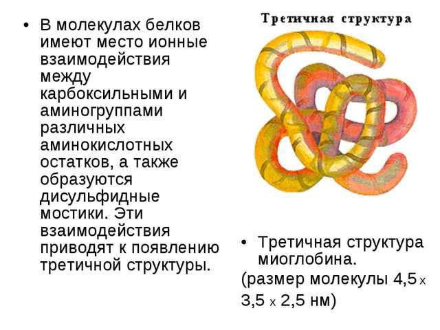 В молекулах белков имеют место ионные взаимодействия между карбоксильными и а...