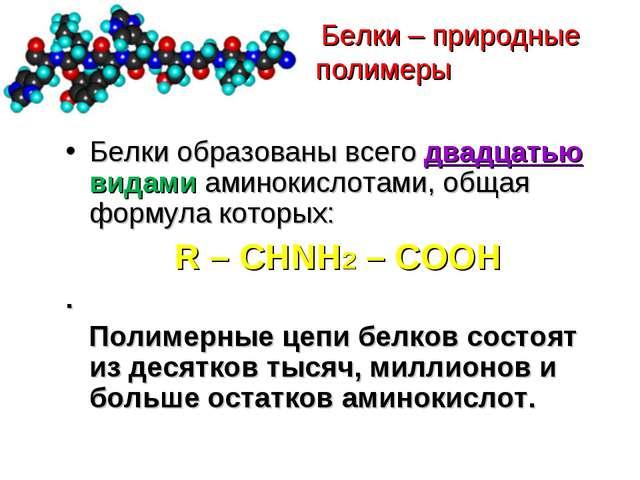 Белки – природные полимеры Белки образованы всего двадцатью видами аминокисл...
