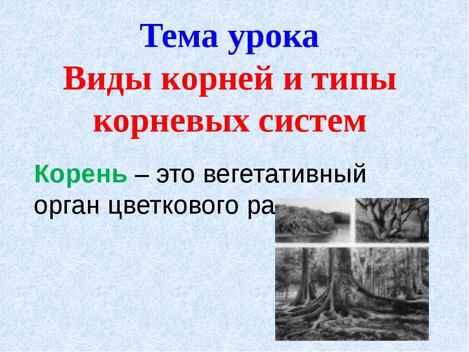 Корень – это вегетативный орган цветкового растения. Тема урока Виды корней и...