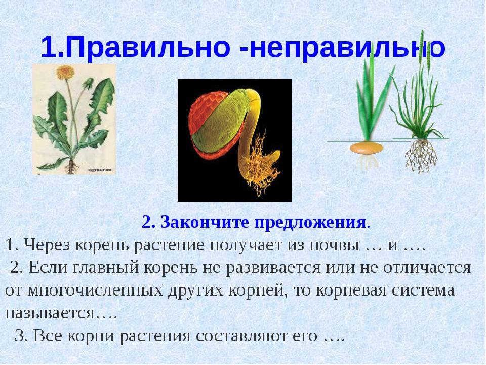 1.Правильно -неправильно 2. Закончите предложения. 1. Через корень растение п...