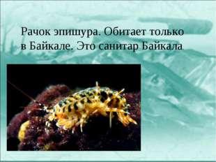 Рачок эпишура. Обитает только в Байкале. Это санитар Байкала.
