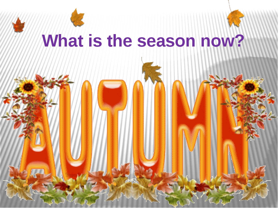 What is the season now?