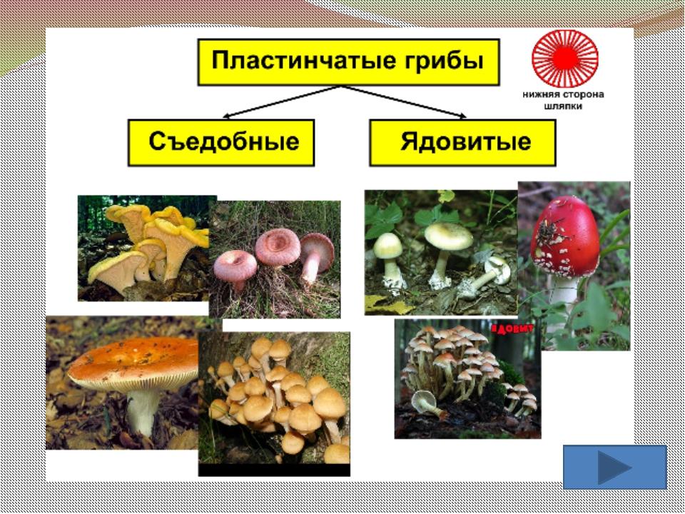Просмотр содержимого документа презентация к уроку биологии по теме бактерии