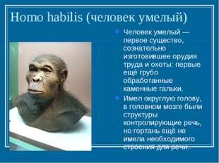 Homo habilis (человек умелый) Человек умелый — первое существо, сознательно и