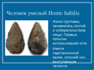 Человек умелый Homo habilis Жили группами, занимались охотой и собирательство