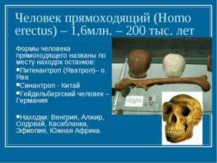 Человек прямоходящий (Homo erectus) – 1,6млн. – 200 тыс. лет Формы человека п