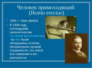 Человек прямоходящий (Homo erectus) 1891 г. Эжен Дюбуа В 1938 году, голландск