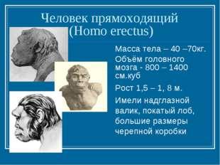 Человек прямоходящий (Homo erectus) Масса тела – 40 –70кг. Объём головного мо