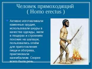 Человек прямоходящий ( Homo erectus ) Активно изготавливали каменные орудия,