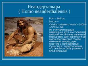 Неандертальцы ( Homo neanderthalensis ) Рост - 165 см. Масса – Объём головног