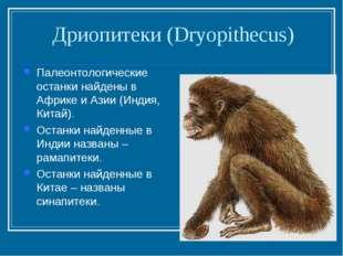 Дриопитеки (Dryopithecus) Палеонтологические останки найдены в Африке и Азии