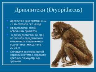 Дриопитеки (Dryopithecus) Дриопите́к жил примерно 12 - 9 миллионов лет назад.