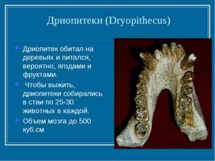Дриопитеки (Dryopithecus) Дриопитек обитал на деревьях и питался, вероятно, я