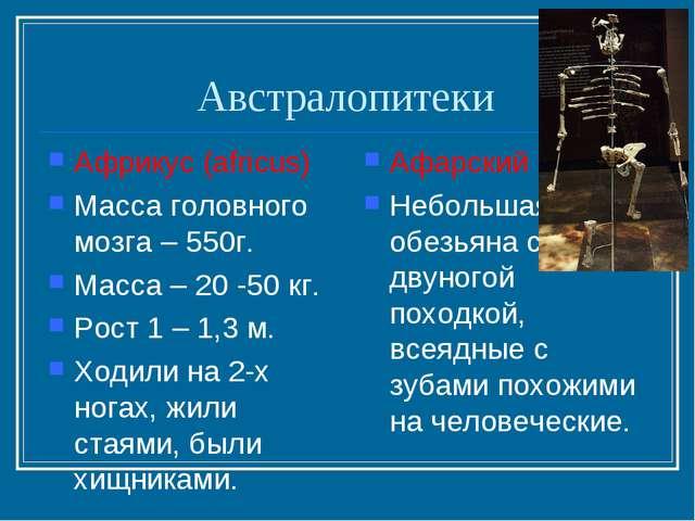Австралопитеки Африкус (africus) Масса головного мозга – 550г. Масса – 20 -50...