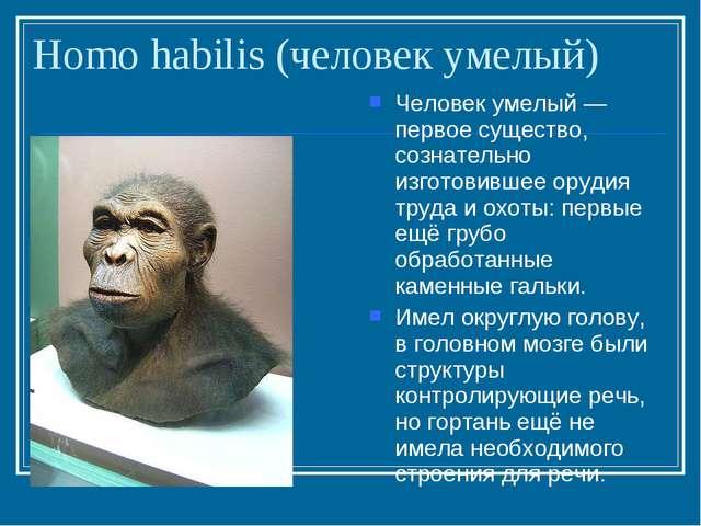 Homo habilis (человек умелый) Человек умелый — первое существо, сознательно и...