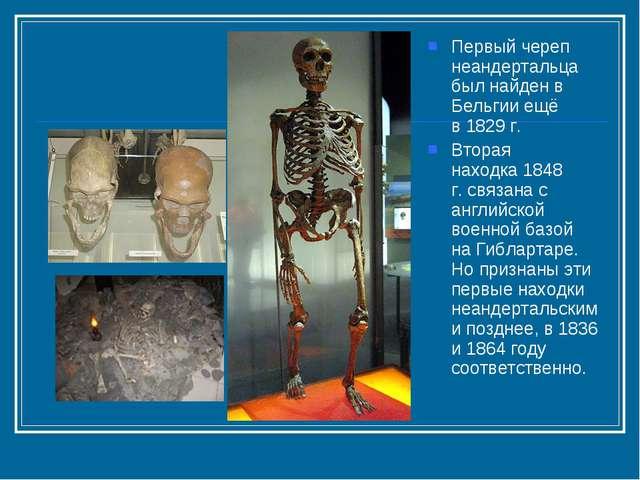 Первый череп неандертальца был найден в Бельгии ещё в1829 г. Вторая находка...