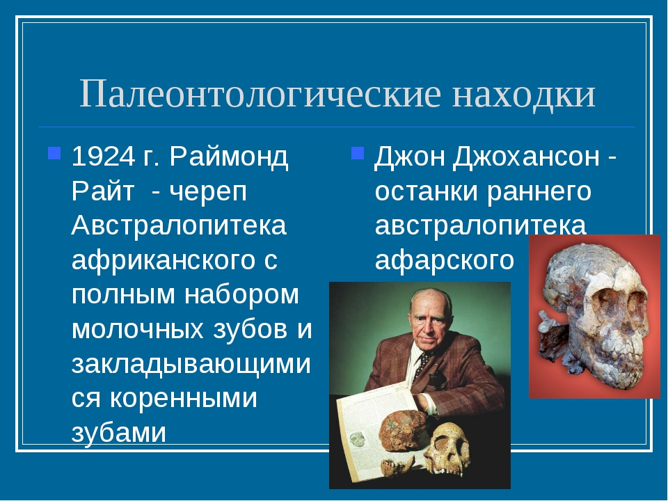 Палеонтологические находки 1924 г. Раймонд Райт - череп Австралопитека африка...