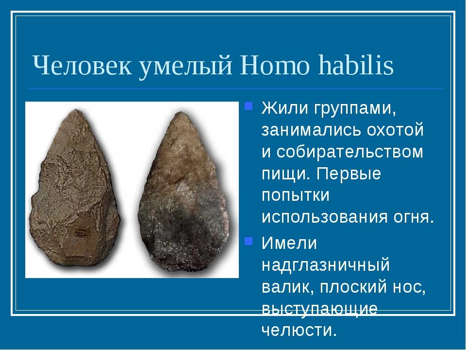 Человек умелый Homo habilis Жили группами, занимались охотой и собирательство...