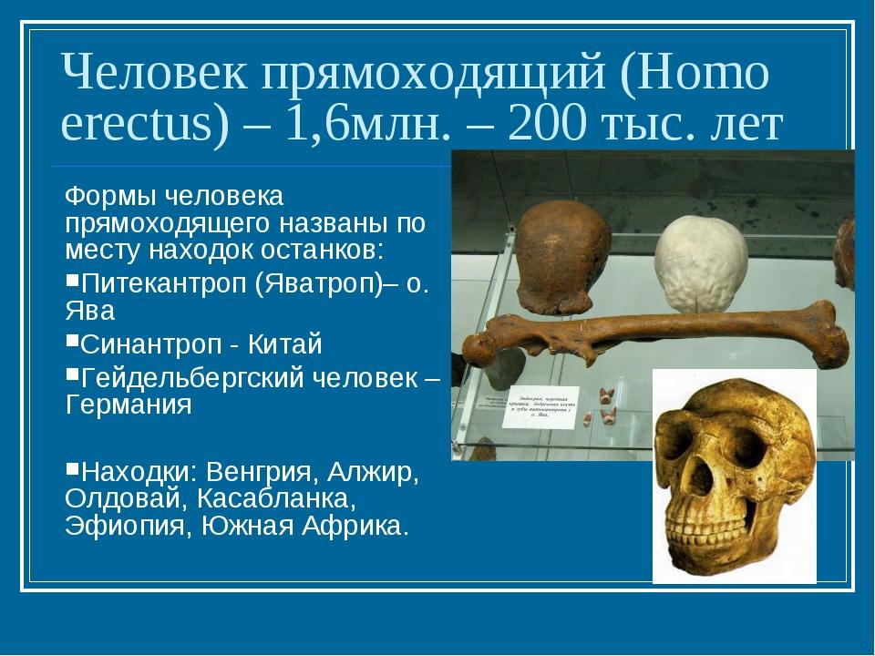 Человек прямоходящий (Homo erectus) – 1,6млн. – 200 тыс. лет Формы человека п...