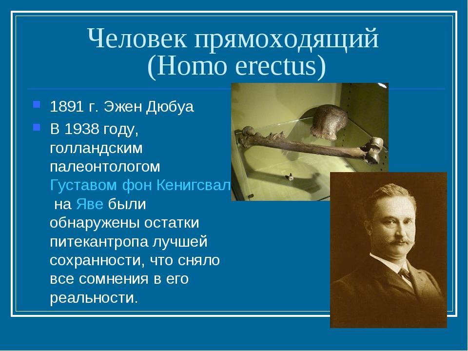 Человек прямоходящий (Homo erectus) 1891 г. Эжен Дюбуа В 1938 году, голландск...