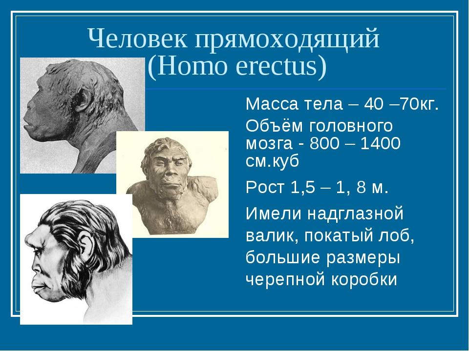 Человек прямоходящий (Homo erectus) Масса тела – 40 –70кг. Объём головного мо...