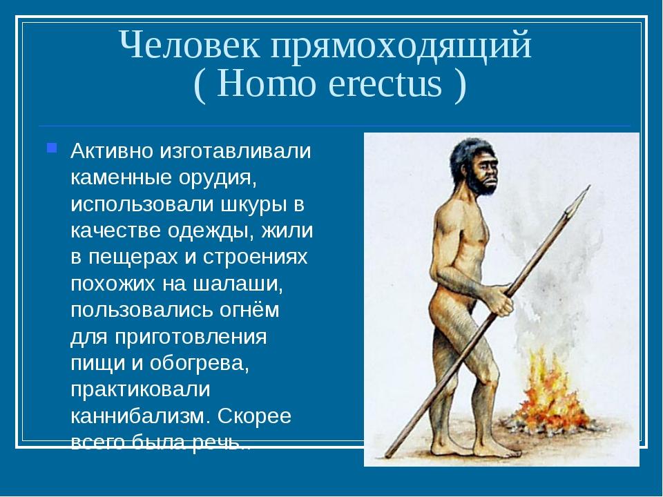 Человек прямоходящий ( Homo erectus ) Активно изготавливали каменные орудия,...