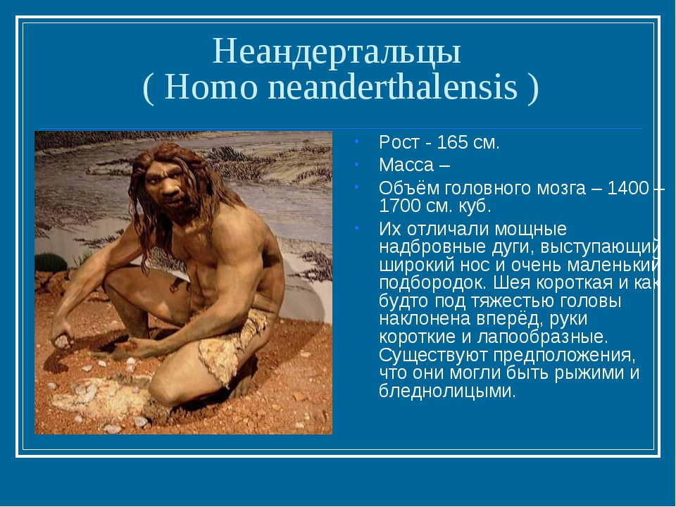 Неандертальцы ( Homo neanderthalensis ) Рост - 165 см. Масса – Объём головног...