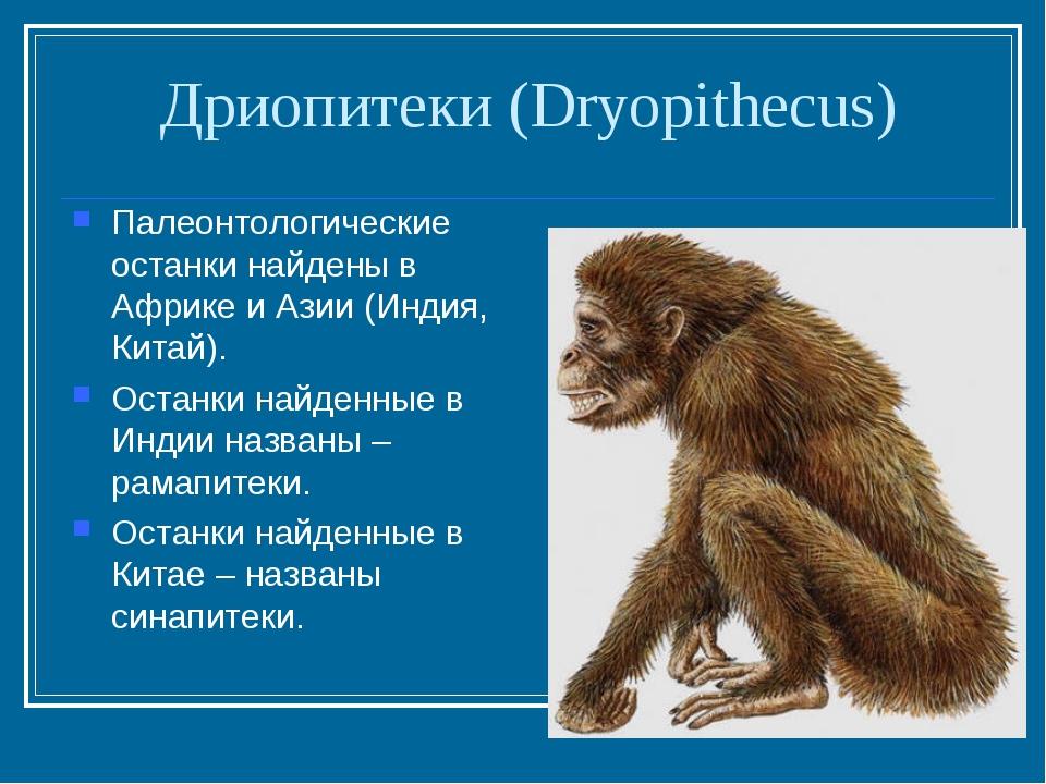 Дриопитеки (Dryopithecus) Палеонтологические останки найдены в Африке и Азии...
