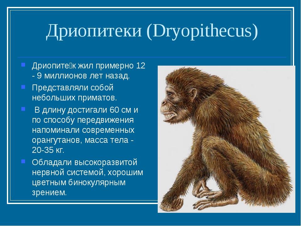 Дриопитеки (Dryopithecus) Дриопите́к жил примерно 12 - 9 миллионов лет назад....