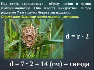 Под стать «травяному» образу жизни и домик мышки-малютки. Она плетёт аккуратн