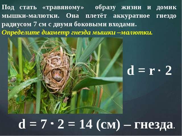 Под стать «травяному» образу жизни и домик мышки-малютки. Она плетёт аккуратн...