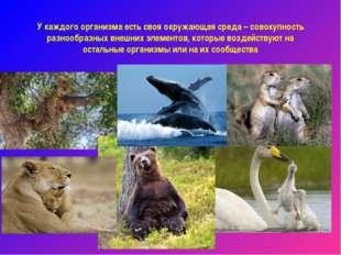 У каждого организма есть своя окружающая среда – совокупность разнообразных в