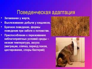 Поведенческая адаптация Затаивание у жертв, Выслеживание добычи у хищников, Б